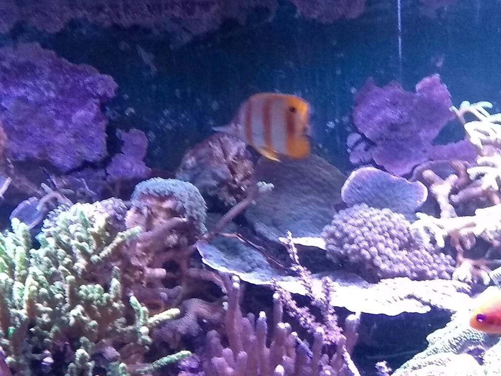 Visite de l'aquarium d'Amnéville du Dimanche 16 Avril 2017 Img_2022