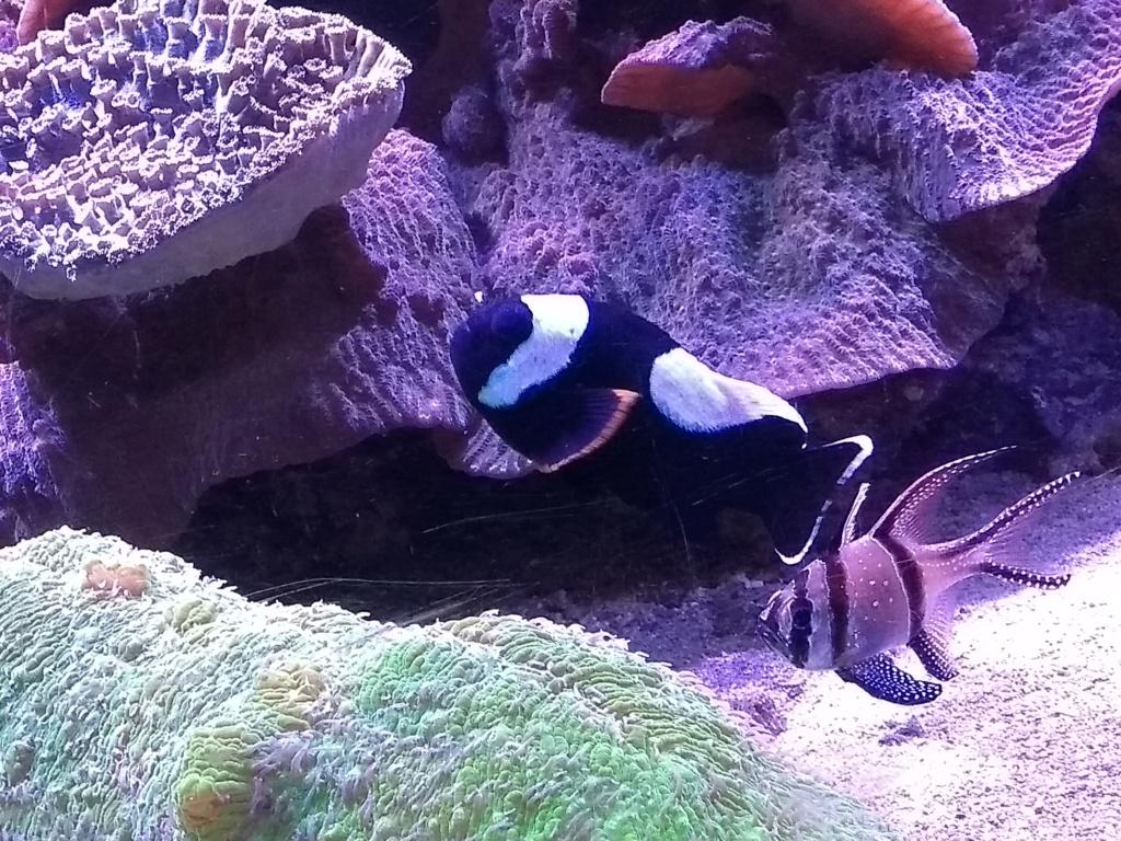 Visite de l'aquarium d'Amnéville du Dimanche 16 Avril 2017 Img_2024