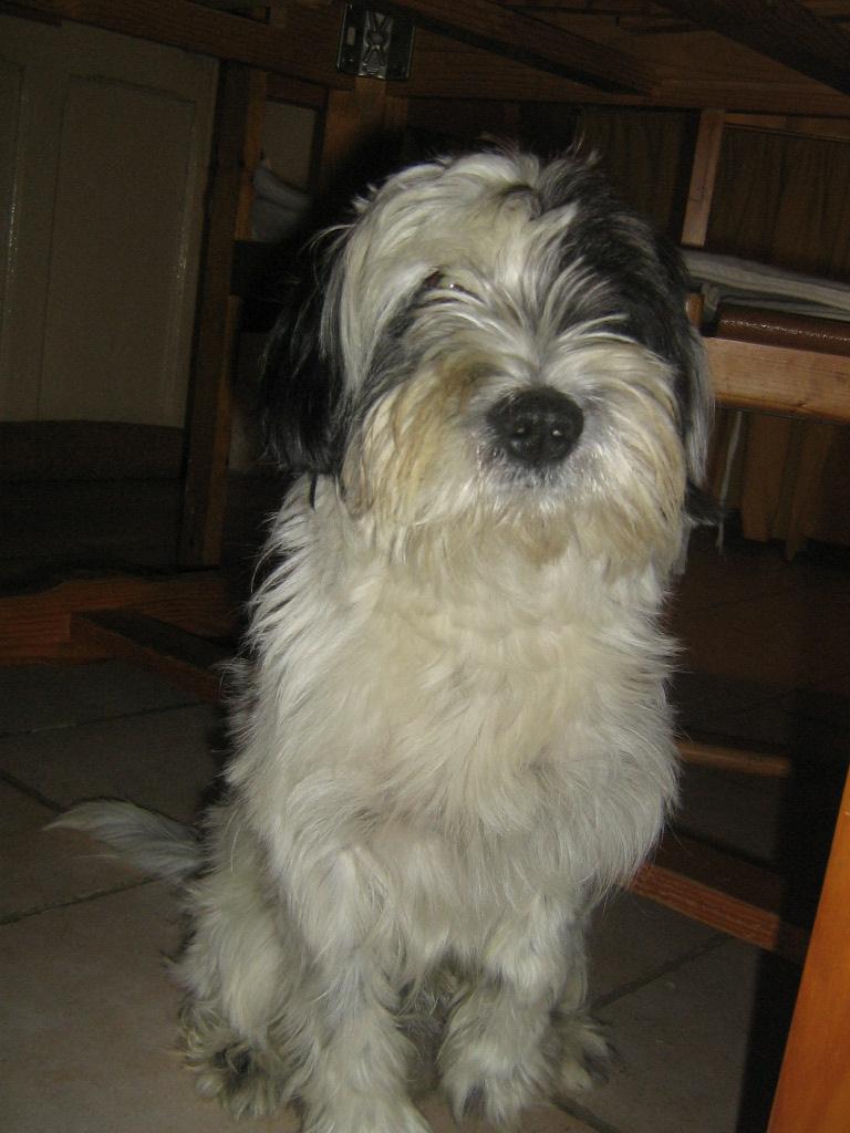 Mon chien ♥ Perso_13
