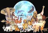 La Vie de nos Animaux
