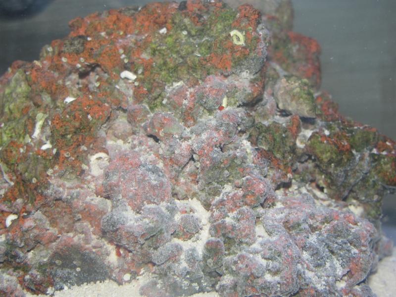1.5 gallon pico reef journal Img_1713