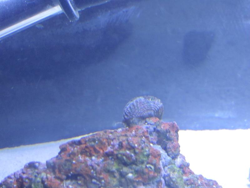 1.5 gallon pico reef journal Img_1714