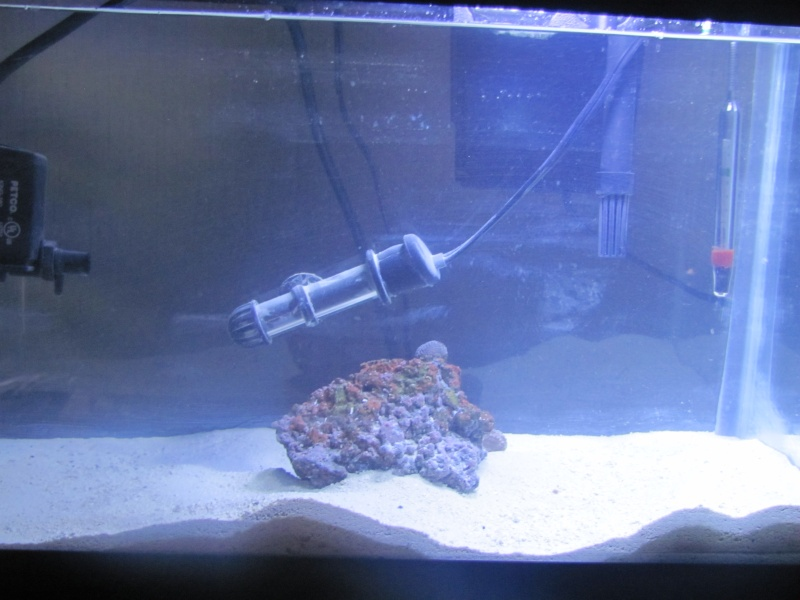 1.5 gallon pico reef journal Img_1715