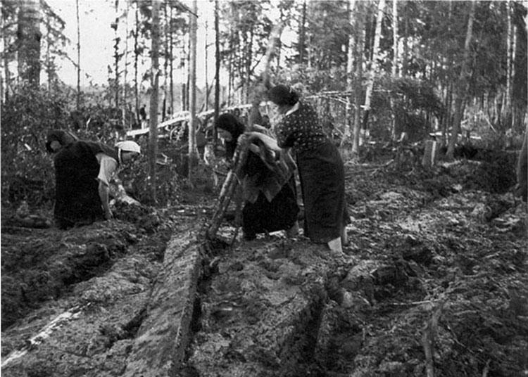 Diverses photos de la WWII - Page 3 19815