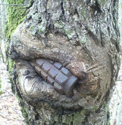 La nature est forte. 365