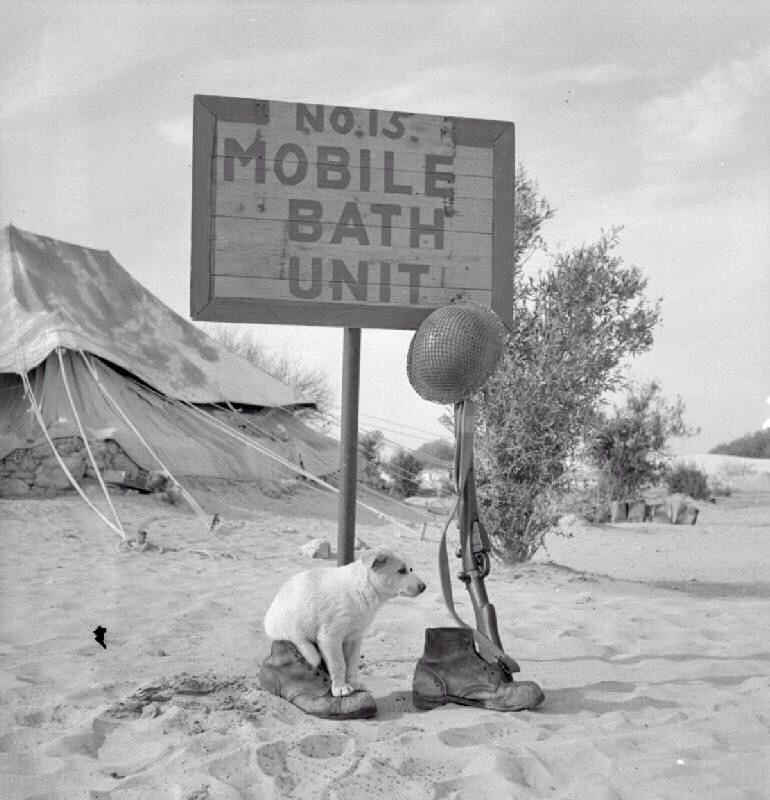 Diverses photos de la WWII - Page 40 66715