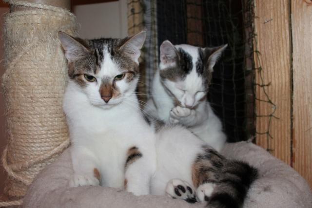 Oggy et Oslo - 2 frères inséparables à adopter ensemble nés en Juin 2018 Img_6716