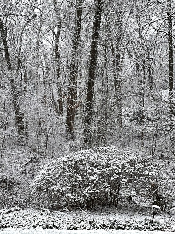 JAN 26th Light Snowfall  - Page 5 2a7d2f10