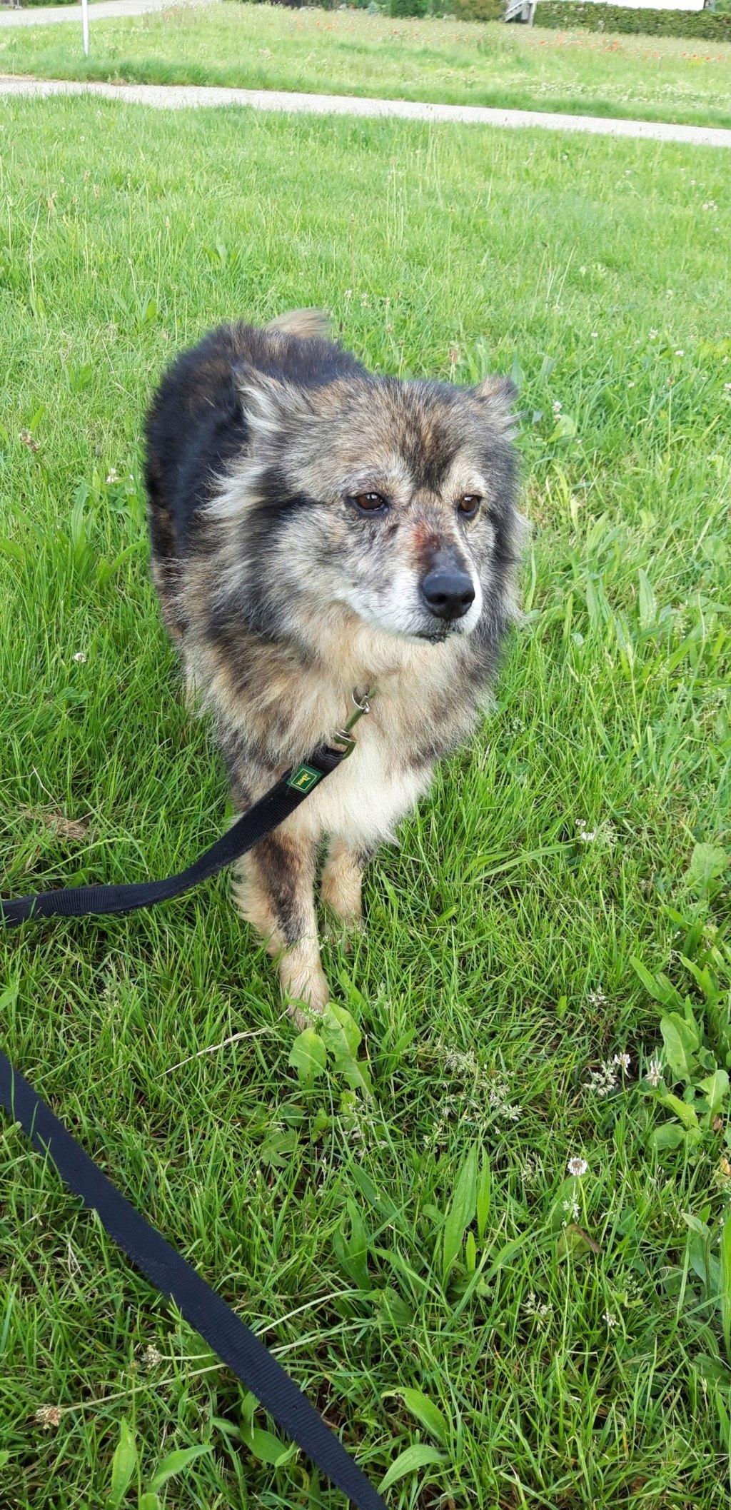 HOPE - femelle, de taille moyenne, née environ en mi mars 2011 (GOLESTI) - REMEMBER ME LAND - Adoptée par Bélinda (Suisse) 99285110