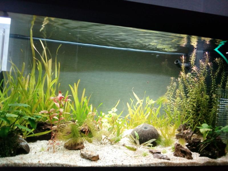 déménager un aquarium 15694110