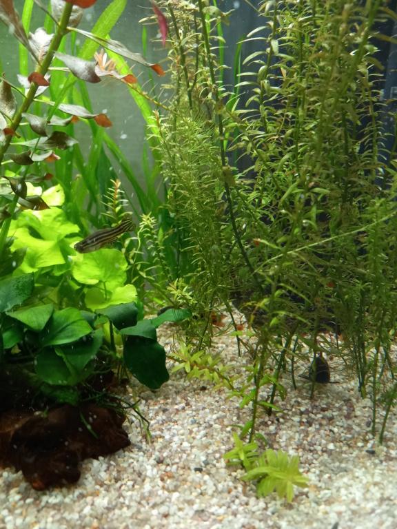 Mon aquarium 110l: Des nouvelles et des questions... - Page 3 16228010