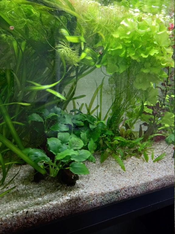 Mon aquarium 110l: Des nouvelles et des questions... - Page 4 16247911