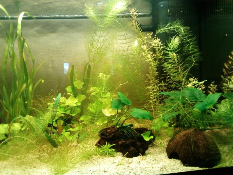 Aquarium de débutante.  - Page 2 Img_2023