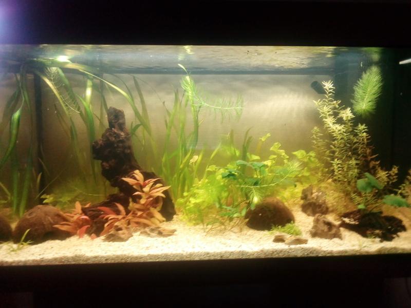 Aquarium de débutante.  - Page 2 Img_2025