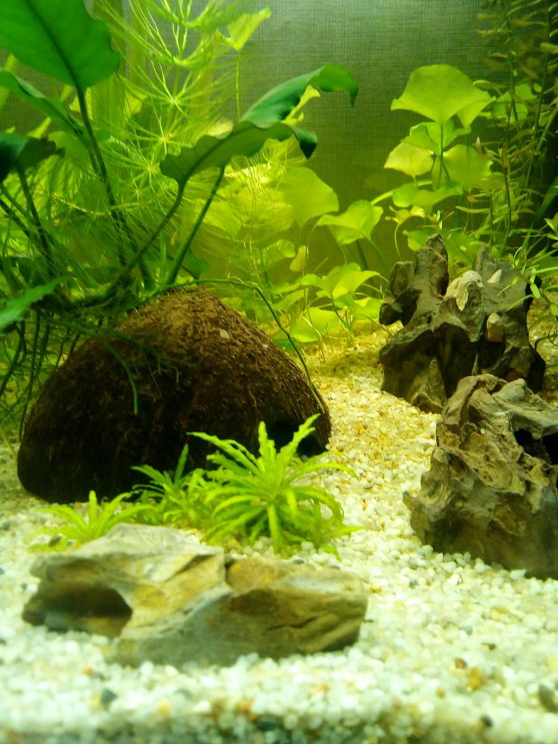 Aquarium de débutante.  - Page 4 Img_2026