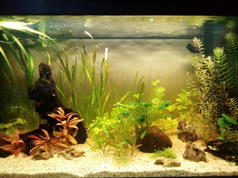 déménager un aquarium Img_2032