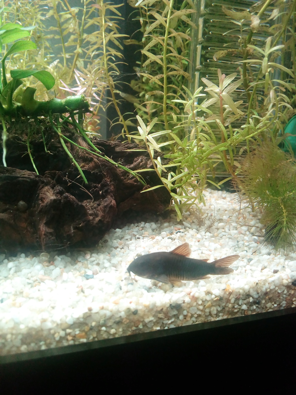 Quels critères pour des poissons sur le bon coin?  Img_2044