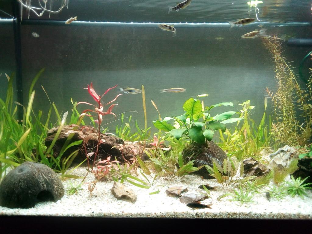 Aquarium de débutante.  - Page 5 Img_2050