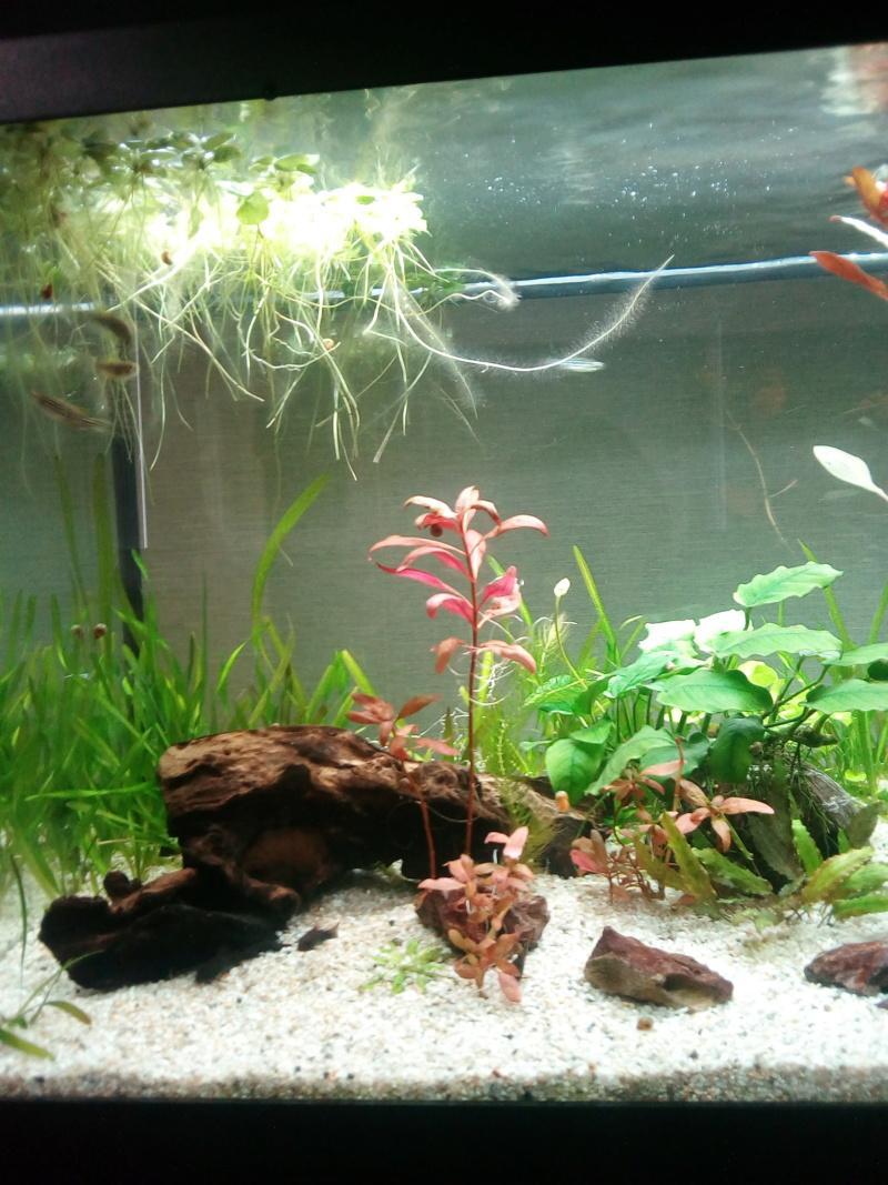 Aquarium de débutante.  - Page 8 Img_2061