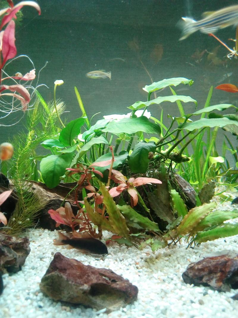 Aquarium de débutante.  - Page 8 Img_2062
