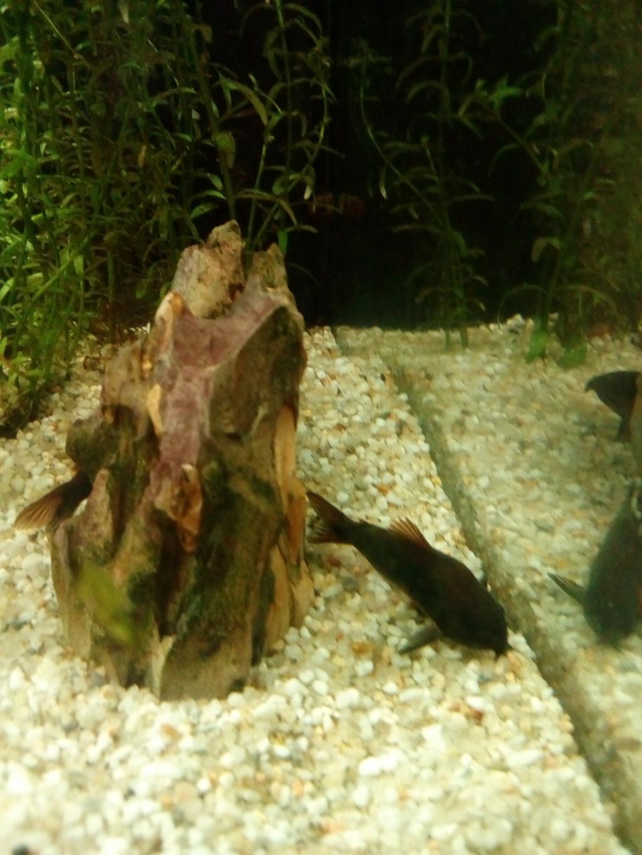 Mon aquarium 110l: Des nouvelles et des questions... Img_2094