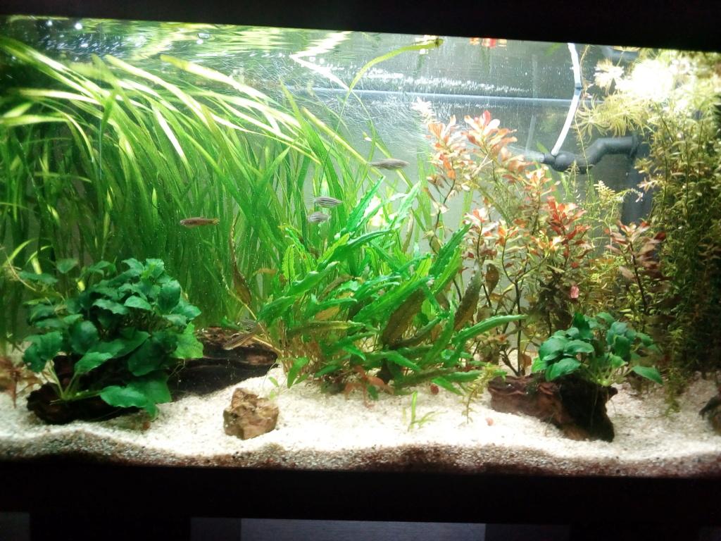 Mon aquarium 110l: Des nouvelles et des questions... Img_2097