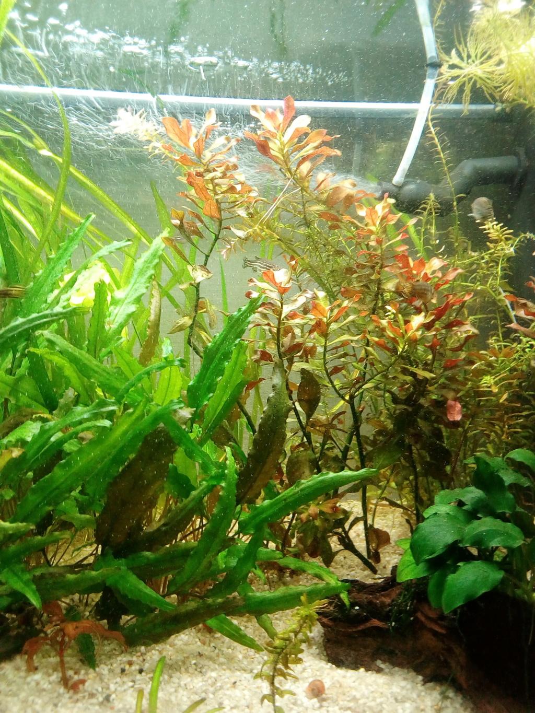 Mon aquarium 110l: Des nouvelles et des questions... Img_2099
