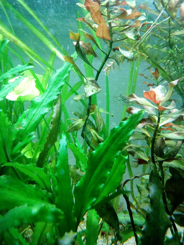 Mon aquarium 110l: Des nouvelles et des questions... Img_2100