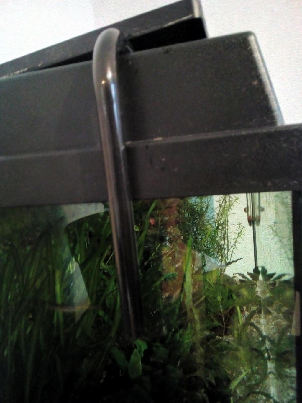 Mon aquarium 110l: Des nouvelles et des questions... - Page 2 Img_2107
