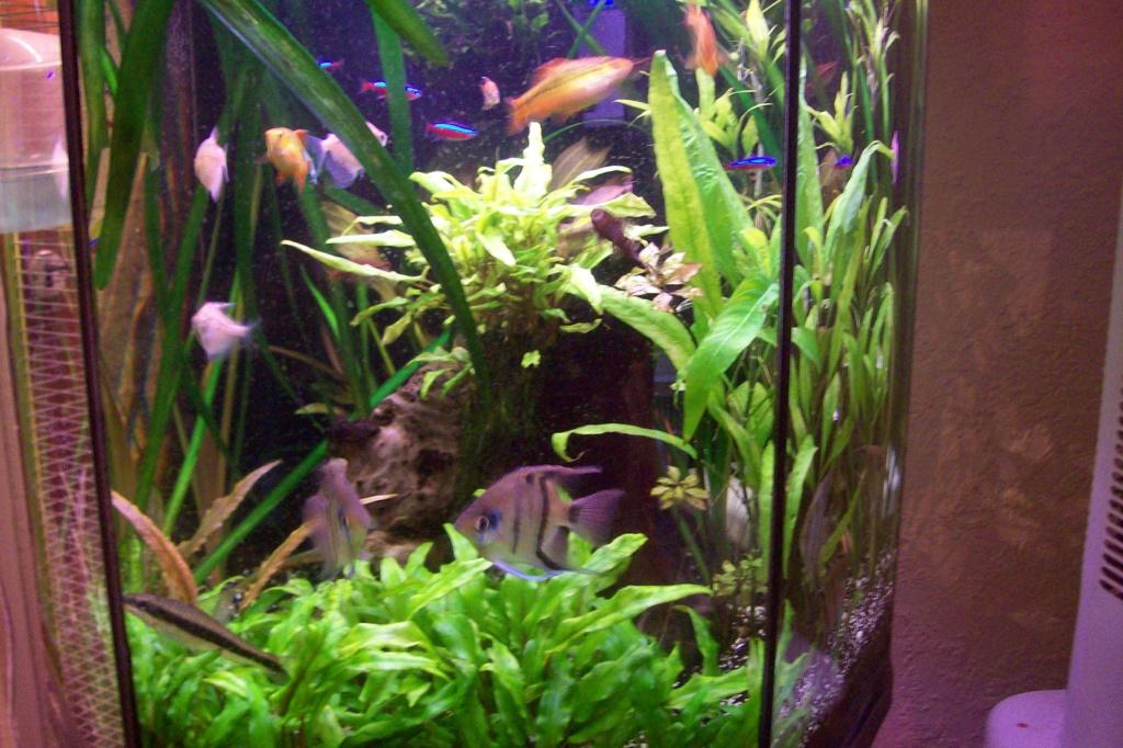 Vos aquariums 000_0010