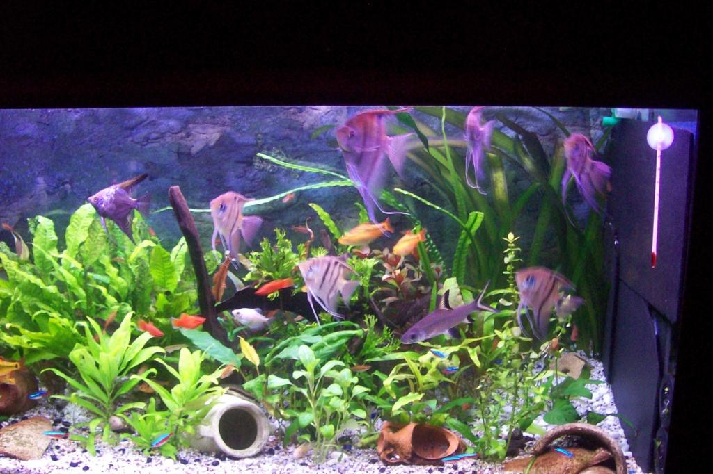 Vos aquariums 000_0011