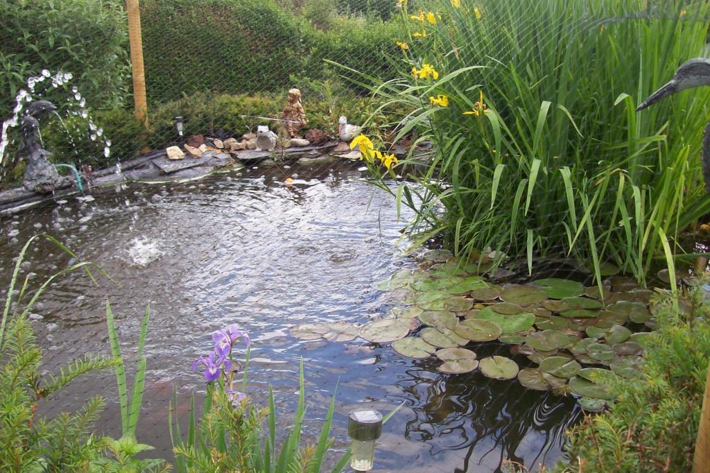 Mon bassin de jardin - Page 10 100_8510