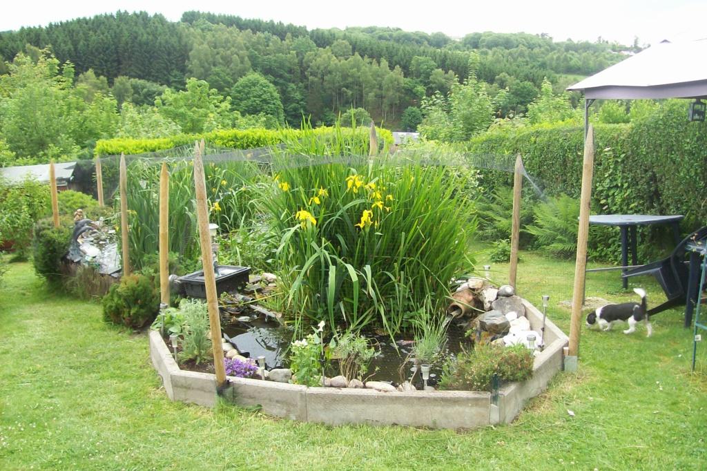 Mon bassin de jardin - Page 10 100_8511