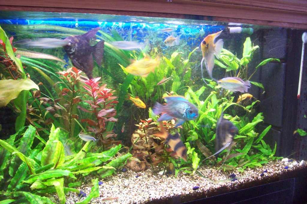 Vos aquariums 100_9518