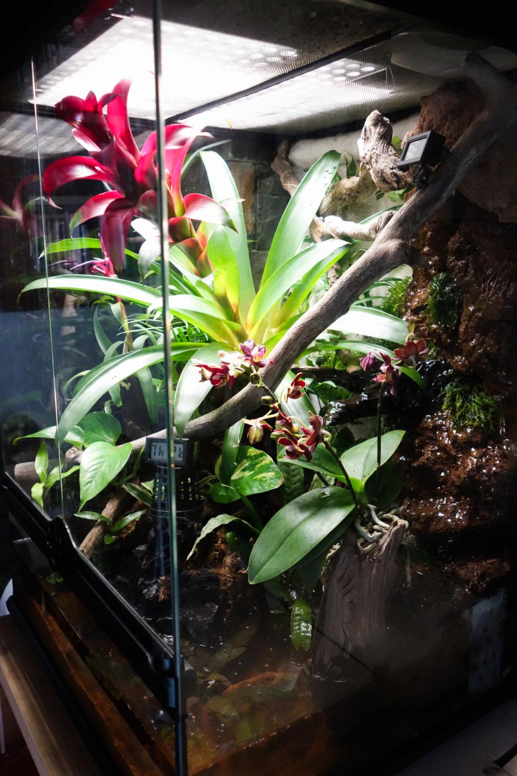 Premier terrarium pour Phelsuma klemmeri Terrar10
