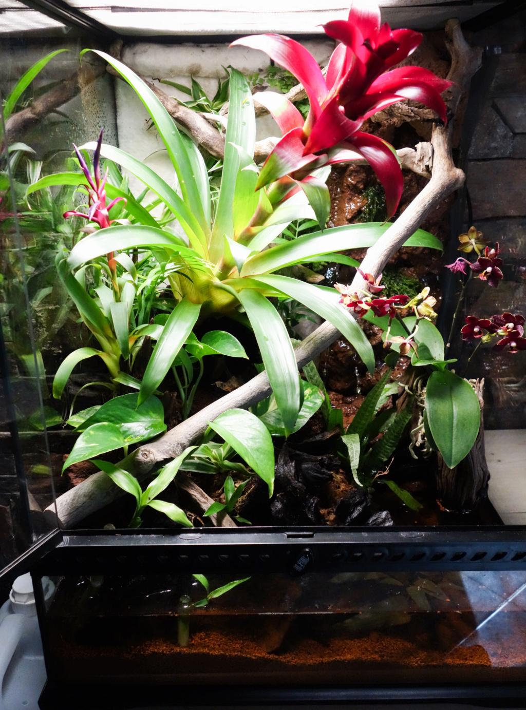 Premier terrarium pour Phelsuma klemmeri Terrar11
