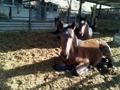 (dpt 04) Isa, Femelle, 10 mois, ONC Femele10