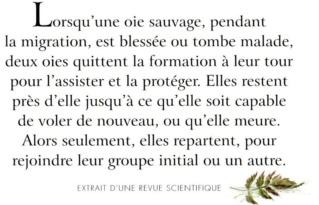 Philosophie de comptoir de la vie - Page 4 Zp286010