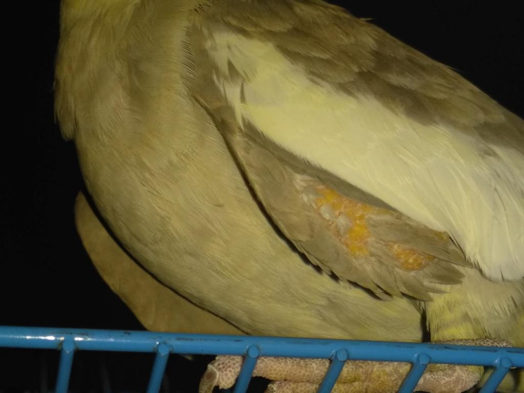 Abcès ou champignon  Img_2012