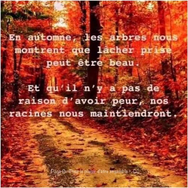 C'est l'automne...  Fb_img15