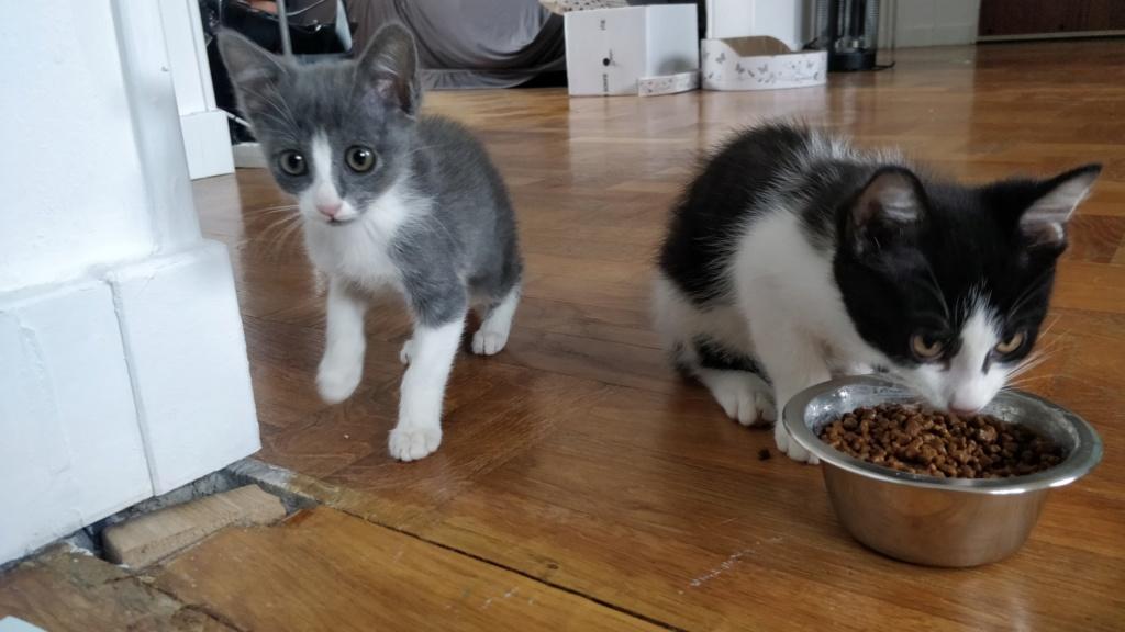 TSUNO et YOKO Img_2012