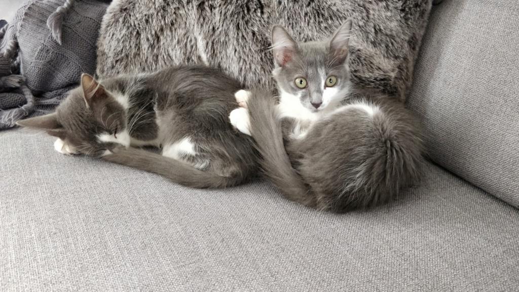 CHAMALLOW (Gaston) et CHATOUILLE (Kitty) Img_2041
