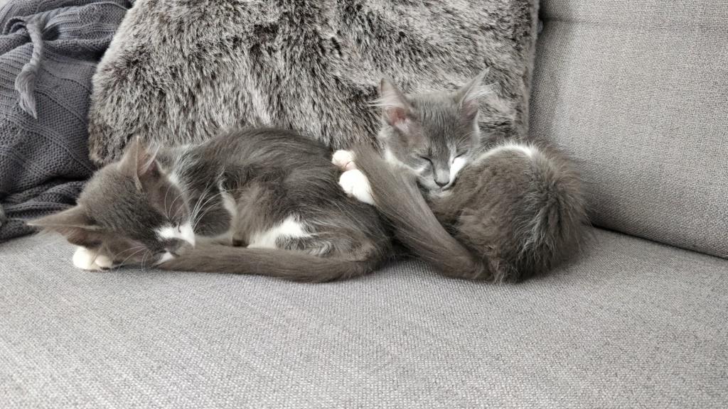 CHAMALLOW (Gaston) et CHATOUILLE (Kitty) Img_2042
