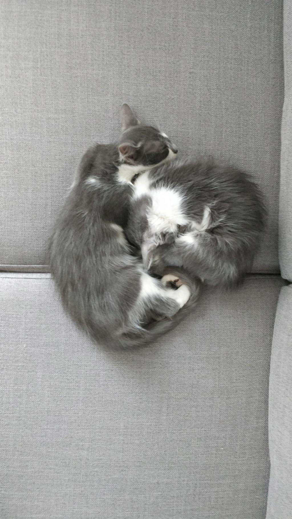 CHAMALLOW (Gaston) et CHATOUILLE (Kitty) Img_2043