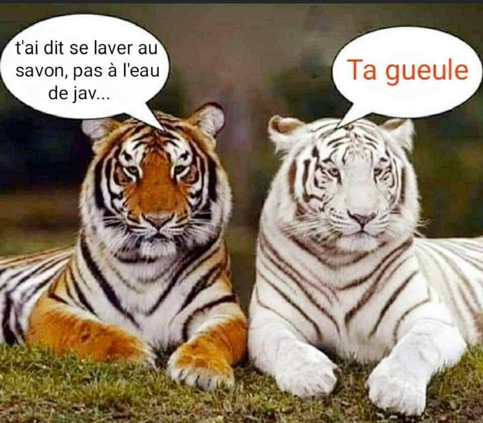 Les meilleurs blagues/montages/meme sur le COVID - Page 5 91606710
