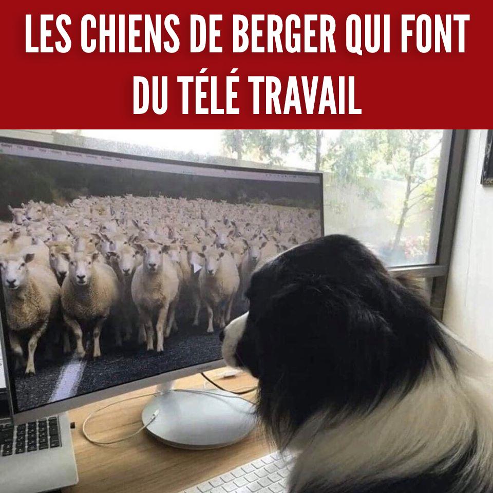 Les meilleurs blagues/montages/meme sur le COVID - Page 4 92500610