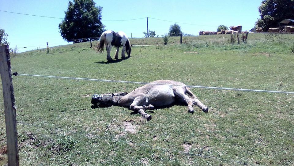 BOURIQUET - ONC âne né en 2009 - adopté en août 2017 par Marie - Page 3 36002711