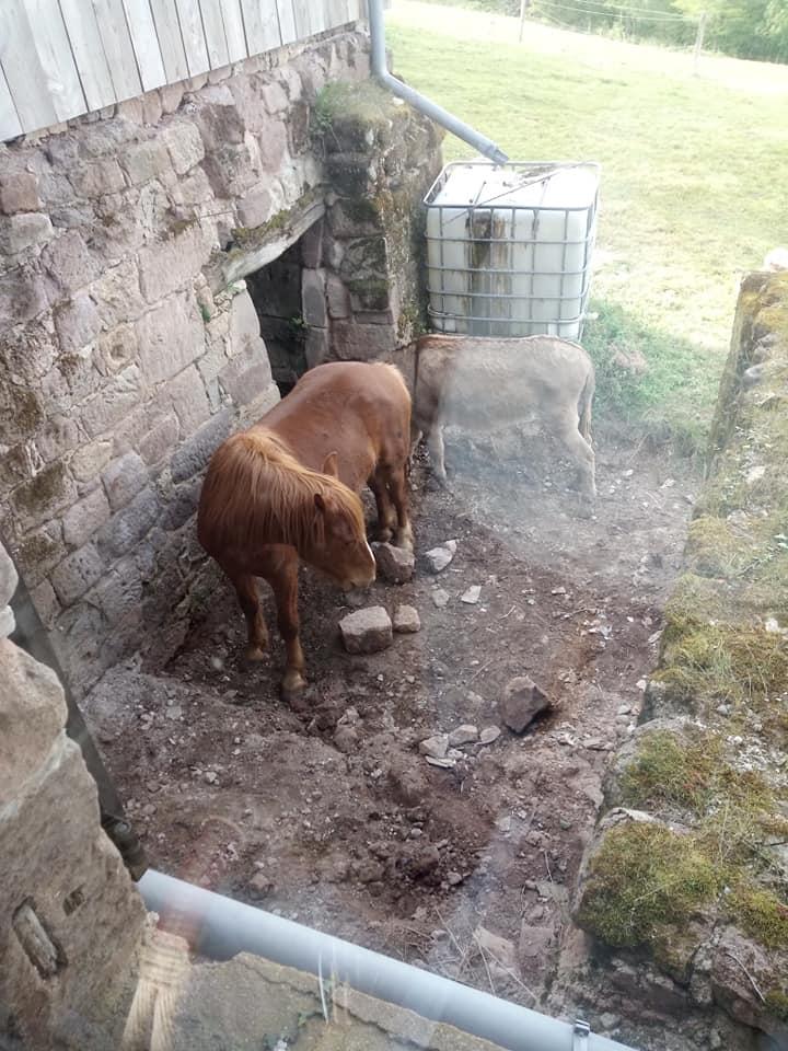 BOURIQUET - ONC âne né en 2009 - adopté en août 2017 par Marie - Page 3 92667910