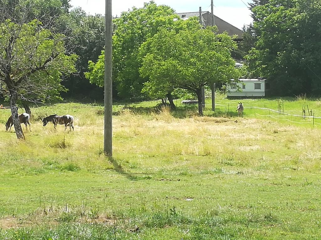 BOURIQUET - ONC âne né en 2009 - adopté en août 2017 par Marie - Page 3 Img_2010