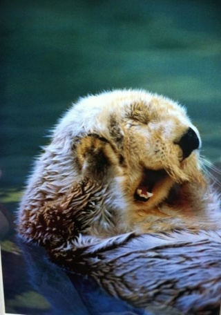 POPULAR 1 DICIEMBRE 2018 - Página 5 Marmot11